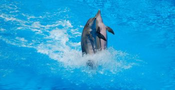 dolphins-3044925_1920